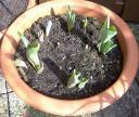 tulpen1.jpg
